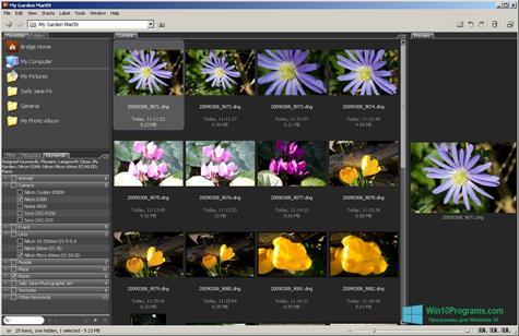 Скриншот программы Adobe Bridge для Windows 10